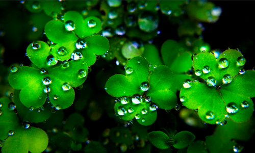 st-patricks-day-clover