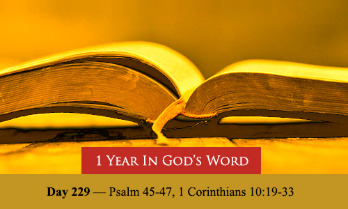 year-in-Gods-Word-day-229