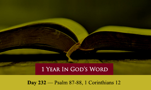 year-in-Gods-Word-day-232