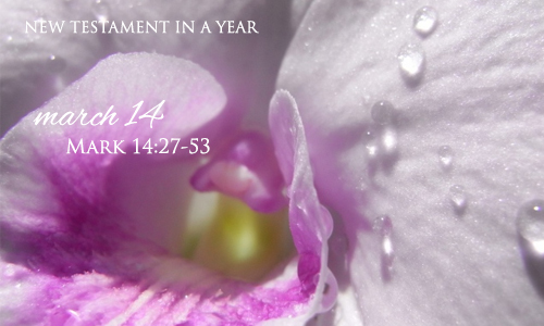 new-testament-in-a-year-march-14