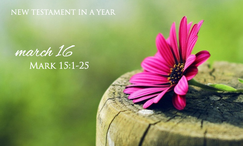new-testament-in-a-year-march-16