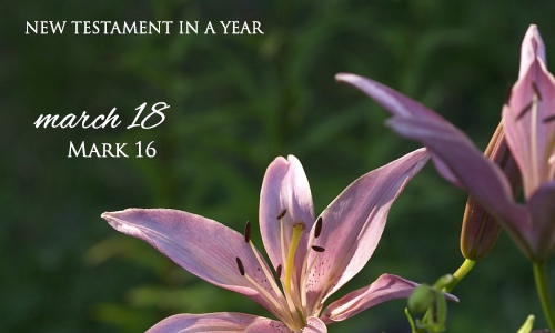 new-testament-in-a-year-march-18