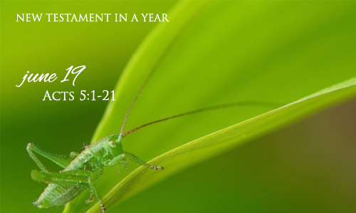 new-testament-in-a-year-june-19