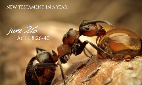 new-testament-in-a-year-june-26