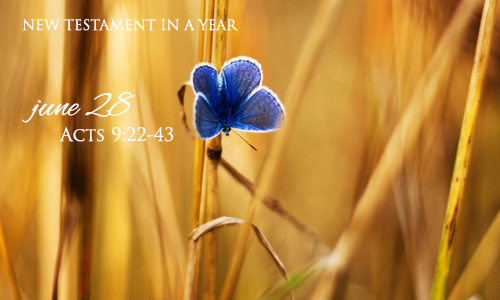 new-testament-in-a-year-june-28