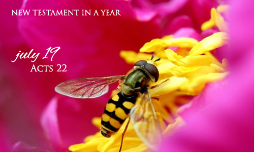 new-testament-in-a-year-july-19