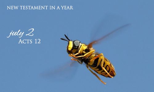 new-testament-in-a-year-july-2