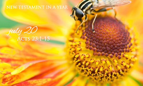 new-testament-in-a-year-july-20
