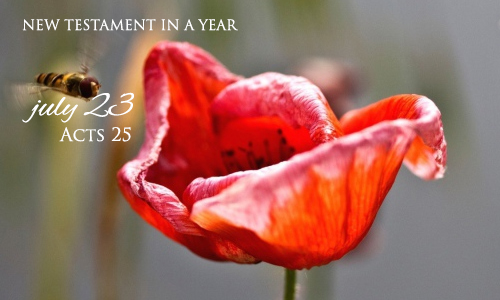 new-testament-in-a-year-july-23