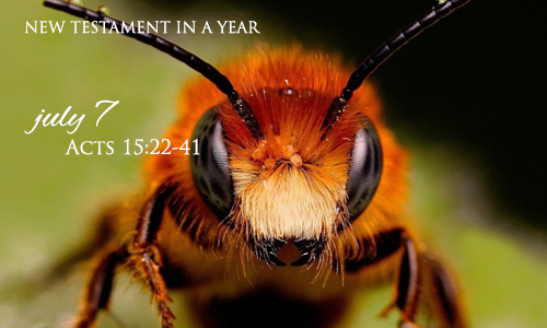 new-testament-in-a-year-july-7