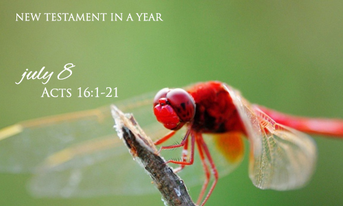 new-testament-in-a-year-july-8