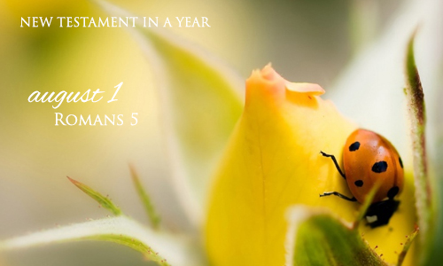 new-testament-in-a-year-august-1