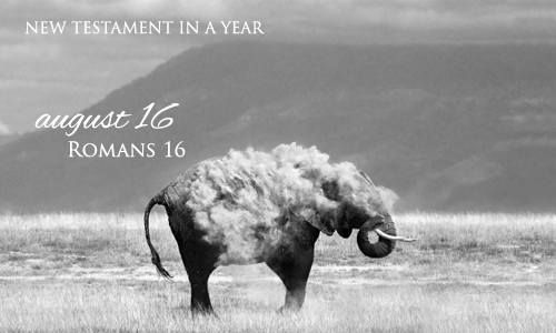 new-testament-in-a-year-august-16