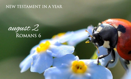 new-testament-in-a-year-august-2