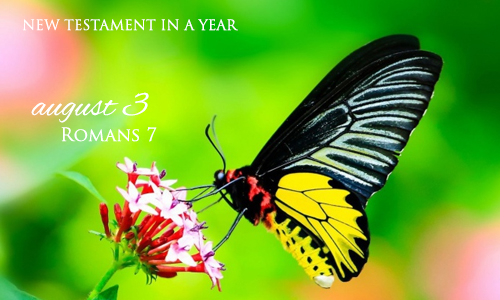 new-testament-in-a-year-august-3