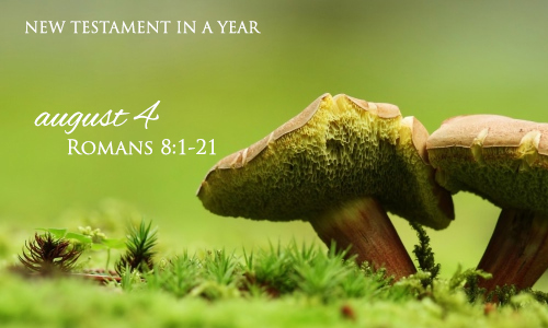 new-testament-in-a-year-august-4