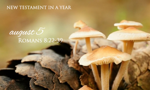 new-testament-in-a-year-august-5
