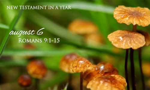 new-testament-in-a-year-august-6