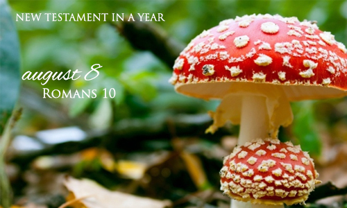 new-testament-in-a-year-august-8