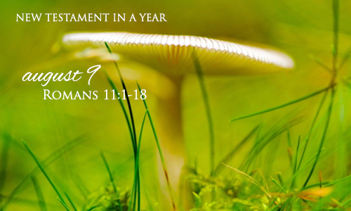 new-testament-in-a-year-august-9