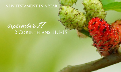 new-testament-in-a-year-september-17