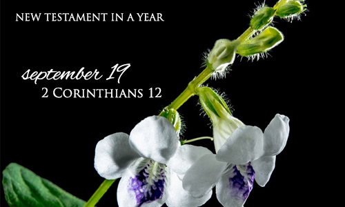 new-testament-in-a-year-september-19