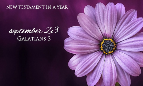 new-testament-in-a-year-september-23