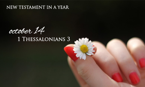 new-testament-in-a-year-october-14