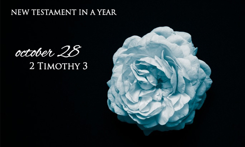 new-testament-in-a-year-october-28