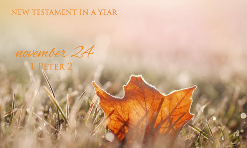 new-testament-in-a-year-november-24