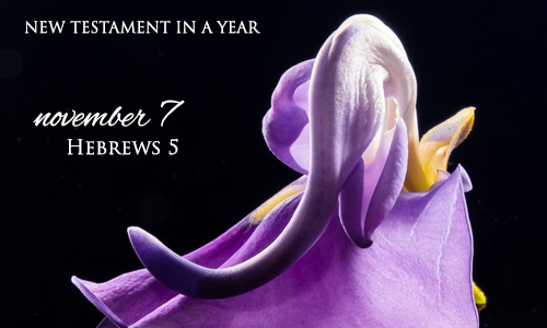 new-testament-in-a-year-november-7