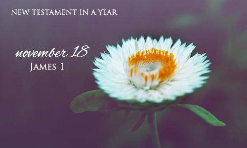 new-testament-in-a-year-november-18