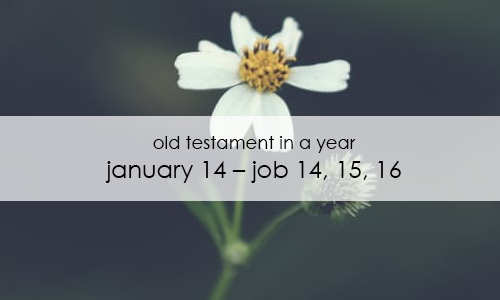 old-testament-in-a-year-january-14