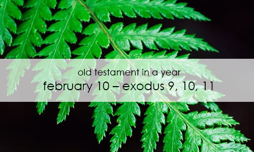 old-testament-in-a-year-february-10