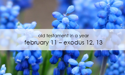 old-testament-in-a-year-february-11