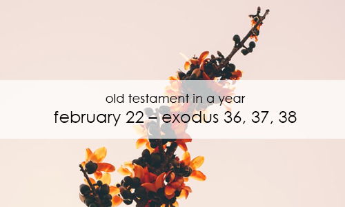 old-testament-in-a-year-february-22