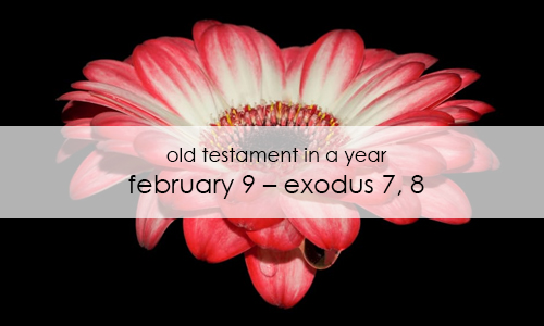 old-testament-in-a-year-february-9