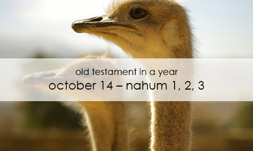 old-testament-in-a-year-october-14